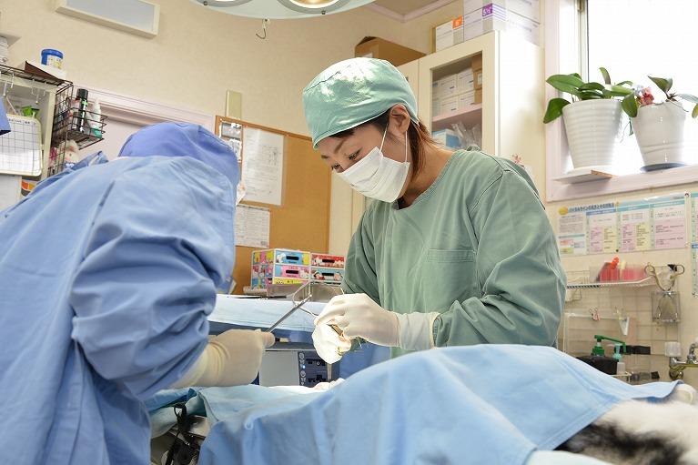 当院では、犬・猫・ウサギの去勢・不妊手術を行っています。